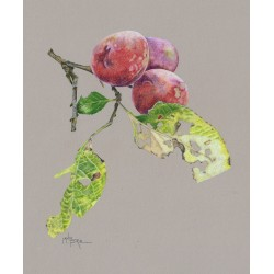 Apples, Plums & pears in coloured pencil with Janie Pirie